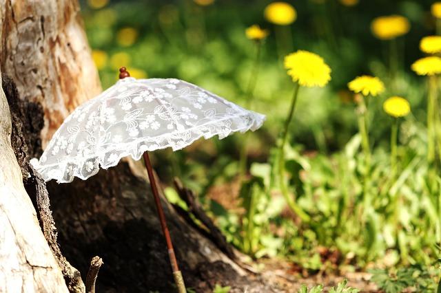 日傘-タンポポ
